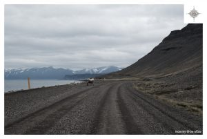 Schafe in den Westfjorden